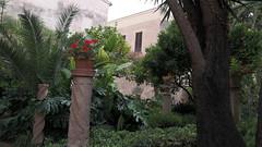 20190908_132336 (uweschami) Tags: spanien espania mallorca palma altstadt arabischesbad palmen hamam mauren banysarabs garten gewölbe