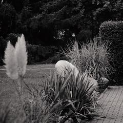Berliner #972 (.Dirk) Tags: berlin olympusem10ii mzuiko7518 street people prime bnw bw sw mft m43 gärtner gardener moabit