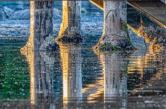 Art under the Bridge #2 (Picture-Perfect Spaces) Tags: britishcollumbia esquimaltlagoon vancouverisland abstract bridge pilings reflections water