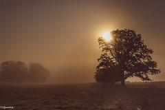 06092019-DSC_0035 (vidjanma) Tags: recogne arbres arbresolitaire brume matin soleil