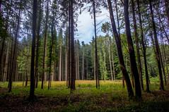 (kuuan) Tags: voigtländerheliarf4515mm manualfocus mf voigtländer15mm aspherical f4515mm superwideheliar apsc trees landscape mostviertel wald forest light