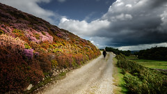 Autumn 2019 (Einir Wyn Leigh) Tags: landscape colorful heather autumn 2019 wales walking mountain clouds rural pleasure nikon light september nature natural wild path road lines white flowers blue