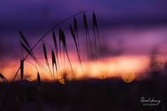 _MG_1122 - e t (Daniel Jiménez Fotógrafo) Tags: landscape paisaje atardecer getdark sun sunset lateafternoon building edificio cloud nube sky cielo colors purple yellow red pink dark darkness madrid spain españa danifotografia danieljimenezfotowixcomportfolio danieljg