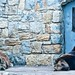 Captive Brown Bear [Urso Pardo] (2019)