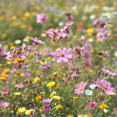 (Andrew :-)) Tags: bronicasqa zenzanons150mm35 kodakportra160 mediumformat 120 6x6 flowers wildflowers