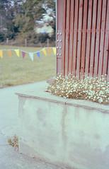 Saturday 8th | Airfield (Daire Quinlan) Tags: fujichrome e6 fuji sensia 35mm slide c41 xpro crossprocess film dublin m42 helios 442 russian contax 167mt cymount contaxyashica airfield food festival