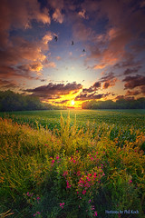 Give More Than You Take (Phil~Koch) Tags: life mood emotions country rural outdoors colors living heaven weather horizons lines landscape art meadow sky sunset clouds scenic vertical photography office portrait serene morning dawn nature natural environment inspired inspirational season beautiful hope love joy dramatic unity trending popular canon fineart arts shadow sun sunrise light peace wisconsin shadows endless earth sunlight horizon pastel summer green crops agriculture goldenhour countryliving