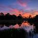 Sunrise at Babcock Wildlife Management Area near Punta Gorda, Florida