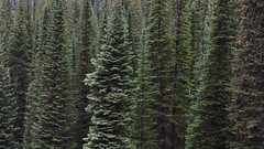 w50 (@GilAegerter / klahini.com) Tags: wallowas hiking mountains backpacking trails wilderness camping peaks