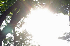 IMGP9636 (BigDaddy6419) Tags: sun tree morning leaves leaf limb sunburst glare flare