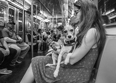 Watch Dog (John St John Photography) Tags: streetphotography candidphotography 1train rectorstreet subwaystation nyctransitauthority subwaycar commuters passengers youngwoman dog watching bw blackandwhite blackwhite blackwhitephotos peopleofnewyork johnstjohnphotography