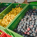 Yellow And Purple Ripe Plums Ia A Boxes