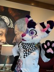 Canfurence 2019 - Kokichi (Kakurady) Tags: fennec fox purple white fursuit canfurence canfur ottawa ontario canada