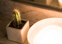 Little Cactus in Candlelight - West Hollywood, CA (ChrisGoldNY) Tags: chrisgoldphoto chrisgoldny chrisgoldberg bookcovers albumcovers licensing westhollywood weho losangeles california socal cali cactus cacti candles candlelight bathrooms decor interior night spikes spiky plants