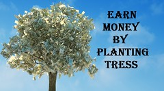 Easiest Way To Earn Money By Planting Trees (domainking147) Tags: background bank banking bill business capital cash commercial concept credit currency dollar economy euro finance financial green grow growth hundred illustration image income investment isolated leaf loan making market money one paper plant profit retirement rich savings sign stock success symbol tree us usa watch wealth white your poland
