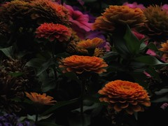 Simply Because (Robert Cowlishaw (Mertonian)) Tags: mertonian lunchstrolling robertcowlishaw canon powershot sx70hs canonpowershotsx70hs dark light warm shadows deeply ineffable awe wonder beauty beautiful