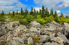 Dolly Sods Wilderness (ashockenberry) Tags: ashleyhockenberryphotography wild wilderness reserve green naturephotography nature natural national mountains majestic trees forest rocky beauty scenic landscape scenery west virginia sky clouds habitat travel tourism ecosystem