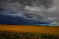 Storm cloud  in  Alberta (Robert Grove 2) Tags: storm rain clouds farm prairie alberta canada wheat field