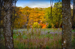 Framed by Mother Nature (WOODSHED Revisited) Tags: new ulm flandrau state park minnesota minn mn cottonwood river fall autumn leaves trees changing colors camping campground festival beer oktoberfest marthadecker onlyinmn pentax k30 dslr