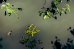 Over the pond (tonguedevil) Tags: outdoor outside countryside summer nature pond water reflections ripples branches leaves plants colour light shadows sunlight