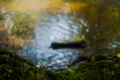 Pool of light (tonguedevil) Tags: outdoor outside countryside summer nature river water reflections ripples grass colour light shadows sunlight
