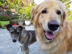 20190604_080217 (citydogs4streetdogs) Tags: penelopa lopa adopted best