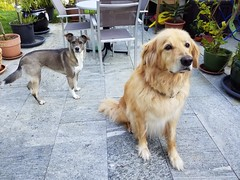20190604_075958 (citydogs4streetdogs) Tags: penelopa lopa adopted best