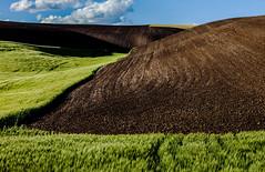 Palouse County, Washington, USA (klauslang99) Tags: klauslang nature agriculture palouse county washington earth grass