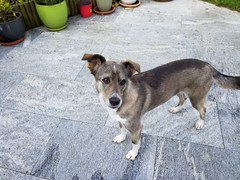 20190604_080205 (citydogs4streetdogs) Tags: penelopa lopa adopted best