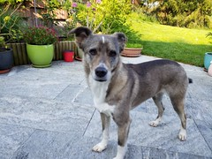 20190604_080232 (citydogs4streetdogs) Tags: penelopa lopa adopted best
