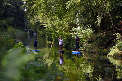 Basingstoke Canal Deepcut 8 September 2019 024 (paul_appleyard) Tags: basingstoke canal deepcut surrey september 2019 paddle paddleboard reflections green water