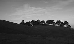 Trees on the hillside (simoneandginko) Tags: victoria roadtrip volcano mountain trees fog sunset monochrome