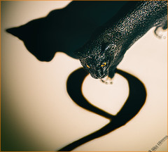 Nine Lives (Silke Klimesch) Tags: macromonday nine 9 number ninelives myth cat shadows shadow blackcat schleich toy vignette if6was9 jimihendrix neun zahl katze schleichtier schatten chat ombre neuf gatto ombra nove nouă pisică umbră gata sombra nueve εννέα γάτα σκιά dokus kedi gölge девять кошка тень olympus omd em5markii mzuikodigitaled60mm128macro luminar3 nikcollection analogefex
