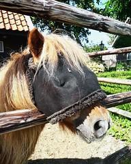 Hidden Fani (kuratormkl) Tags: pony pretty hide lightandshadow nature summer sun weather hot rays portrait animals zeeland
