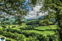 Haut Béarn (https://pays-basque.coline-buch.fr/) Tags: nature pyrénéesatlantiques paysage béarn arette arbres herbes prairies barétous vallée