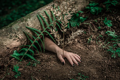 Nature (~ Jessy S ~) Tags: nikon nikkor d750 nikond750 50mm 50 18 hand main nails ongles forest foret wood fern foliage vegetal fougère sphere green bois feerie magic magical nikkor50mmf18