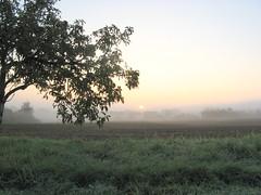 Wie den Träumenden am Morgen (amras_de) Tags: wiesbaden dotzheim sauerland morgen matí ráno morning mateno mañana goiz aamu matin maidin mattino rytas ochtend morgon manhã forenuin sonnenaufgang ortus solopgang sunrise orto päikesetõus eguzkiirteera auringonnousu leverdesoleil aurora solisortus sauletekis lekts zonsopgang solrenning soloppgang swit nascerdosol rasarit soluppgång