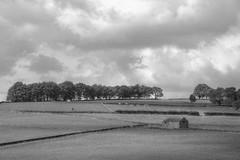 Newtownland (Tony Tooth) Tags: nikon d7100 nikkor 55300mm landscape countryside rural farmland farming fields newtown staffs staffordshire bw blackandwhite monochrome england
