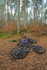 (BurnThePlans) Tags: bike cycle mountainbike scotland highlands woods forest steel hardtail surly karatemonkey stanton sherpa