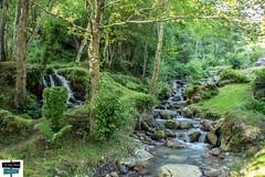 Torrent (https://pays-basque.coline-buch.fr/) Tags: sainteangrâce paysbasque pyrénéesatlantiques pyrénées paysage eaudouce nature colinebuch france