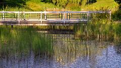 Sunlight on the bridge (Tim Ravenscroft) Tags: bridge pond lake refections grasses garden grönsöö sweden hasselblad hasselbladx1d