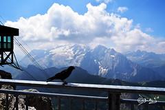Marmolada - Italy (Biagio ( Ricordi )) Tags: marmolada trentino italy neve montagna nuvole pordoi funivia corvo uccelli