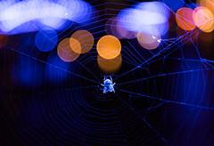 BLUE PORT (michael_hamburg69) Tags: hamburg germany deutschland hafen harbour harbor light blue blau blueport hansestadt speicherstadt nachtaufnahme longexposure port michaelbatz lichtkünstler lichtkunst beleuchtung kreuzspinne spider