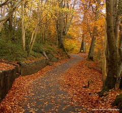 autumn in swans park (patrickcolhoun) Tags: autumn buncrana donegal ireland landscape nature swanspark trees countydonegal ulster leaves woods