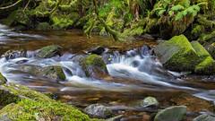 Flow and Grow (andrewfokwm) Tags: ireland river stream moss water plants rock wet