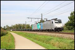 LINΞΛS 186 456-0 & 2838 // 06-09-2019 Zichem (Erik Piussi) Tags: lineas l35 zichem staaltrein railpool 2838 186 4560