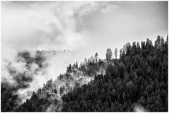 What's behind... (Ody on the mount) Tags: bäume dolomiten em5ii filmkorn nebel omd olympus ortisei pflanzen rahmen südtirol urlaub wald wolken art bw blackandwhite clouds forest frame grain miraclesofcreation mist monochrome sw schwarzweis trees woods