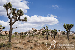 Joshua Tree National Park 3 (MrDiscoDucks) Tags: brenden fleming brendenfleming nikon d810 nikond810 2018 hiking hike adventure explore mrdiscoducks outdoors outdoor outside travel traveling landscape landscapes photo photography photographer nature paths sun sunny camping camp trail trails summer may 2019 joshua tree national park california joshuatree nationalpark