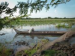 Small Wooden Fishing Boat in Shallow Marsh in Asia (jasonrosette) Tags: camerado jrosette jasonrosette asia rural water natural boat lily agriculture fishing canoe marsh pond