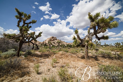 Joshua Tree National Park 6 (MrDiscoDucks) Tags: brenden fleming brendenfleming nikon d810 nikond810 2018 hiking hike adventure explore mrdiscoducks outdoors outdoor outside travel traveling landscape landscapes photo photography photographer nature paths sun sunny camping camp trail trails summer may 2019 joshua tree national park joshuatree california nationalpark